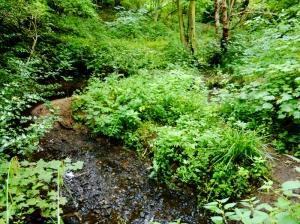 A brook.