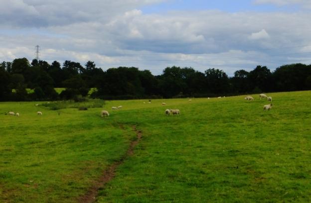 A sheep field.