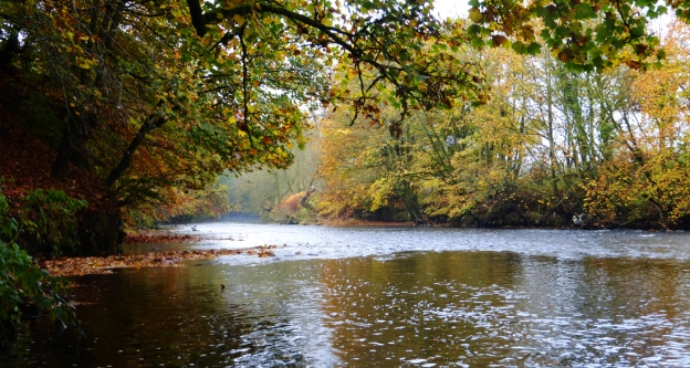 River Goyt with autumn trees