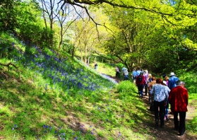 Goyt Valley SOS Bluebell Walk woods fbk