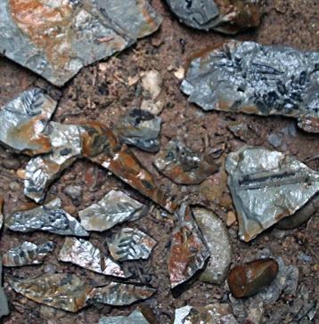 Goyt Valley Walk fossils crop smaller