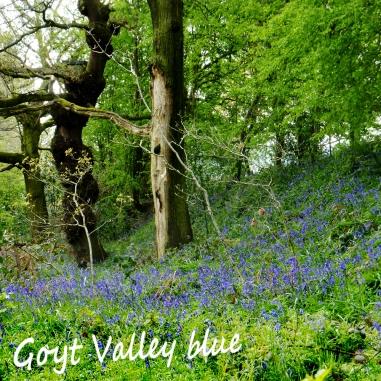Highfield blue