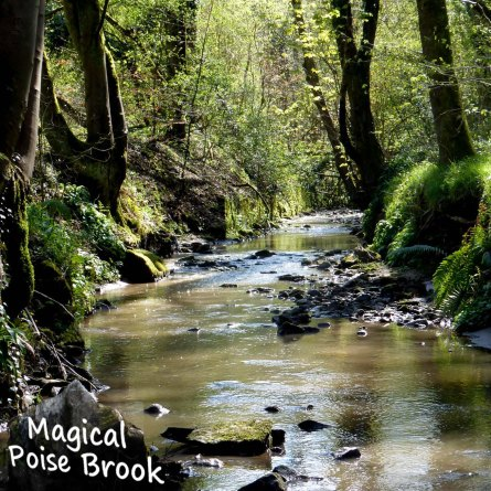 Poise Brook April 19