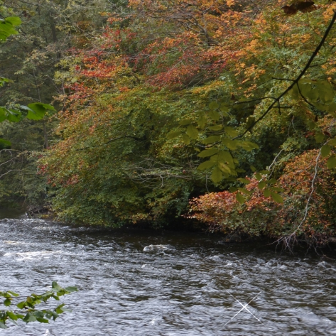 Goyt autumn Oct 19 river